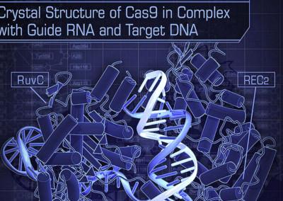 RNA Crystal Science