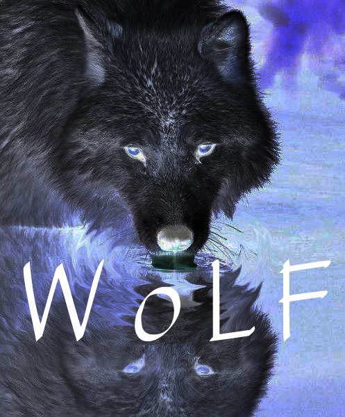 WoLF Logo Horizontal TM provides quantum water